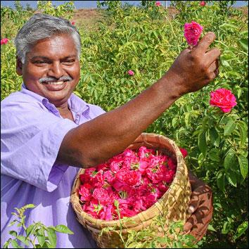 50 சென்ட் ரோஜா... 50 சென்ட் அரளி... மாதம் ரூ 25,000!