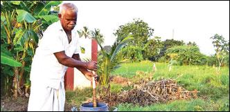 ஏக்கருக்கு ரூ. 1 லட்சம் செழிப்பான லாபம் தரும் - இயற்கை சம்பங்கி