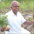 பலே வருமானம் தரும் ஊடுபயிர் பீட்ரூட்... 1.25 ஏக்கர், ரூ 80 ஆயிரம்...