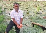 மக்கானா... விதையாக விற்றால் கிலோ 70 ரூபாய்... பொரித்து விற்றால் கிலோ 270 ரூபாய்!