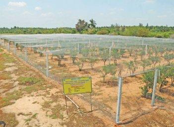 நீங்கள் கேட்டவை: குறைந்த செலவில் அரசு வழங்கும் ஆர்கானிக் சான்றிதழ்!