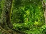 நத்தையின் பாதை - 5 - காட்டைப் படைக்கும் இசை - ஜெயமோகன்